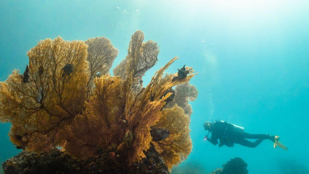 Phuketin lähialueet Phi Phi Racha Shark Point