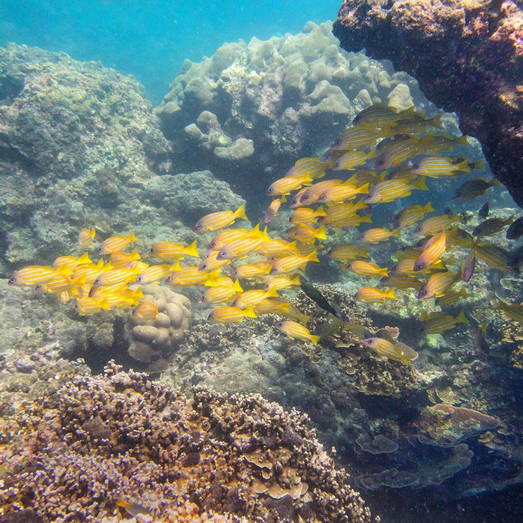 Phuket Rantasukellus