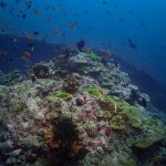 Sukellus Phuket Daytrip Safari Liveaboard Päiväretki