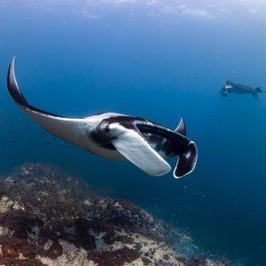 INTO Dive center sukellus Phuket Myanmar Black Rock