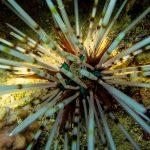 INTO Dive center sukellus Phuket merisiili
