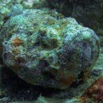 INTO Dive center sukellus Phuket kivikala