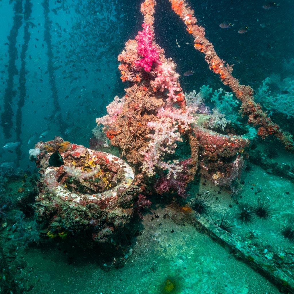 King Cruiser Wreck Into Dive Center